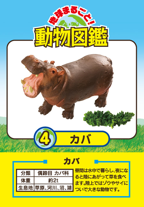 animal encyclopedia with pictures pdf